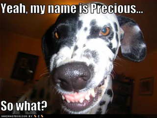 funny-dog-pictures-name-precious.jpg